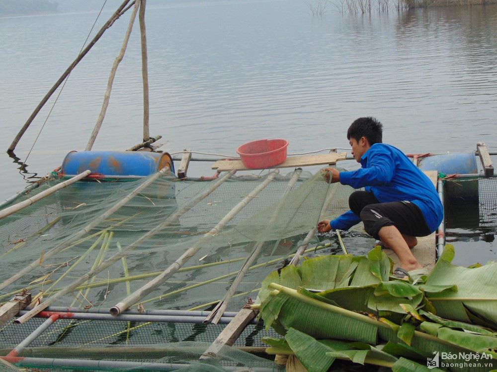 """Nghệ An: Nuôi cá lồng ở lòng hồ thủy điện, toàn loại đặc sản con to bự, nông dân """"bỏ túi"""" hàng trăm triệu đồng - Ảnh 2."""