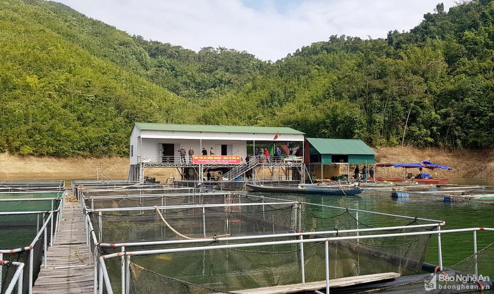 """Nghệ An: Nuôi cá lồng ở lòng hồ thủy điện, toàn loại đặc sản con to bự, nông dân """"bỏ túi"""" hàng trăm triệu đồng - Ảnh 4."""