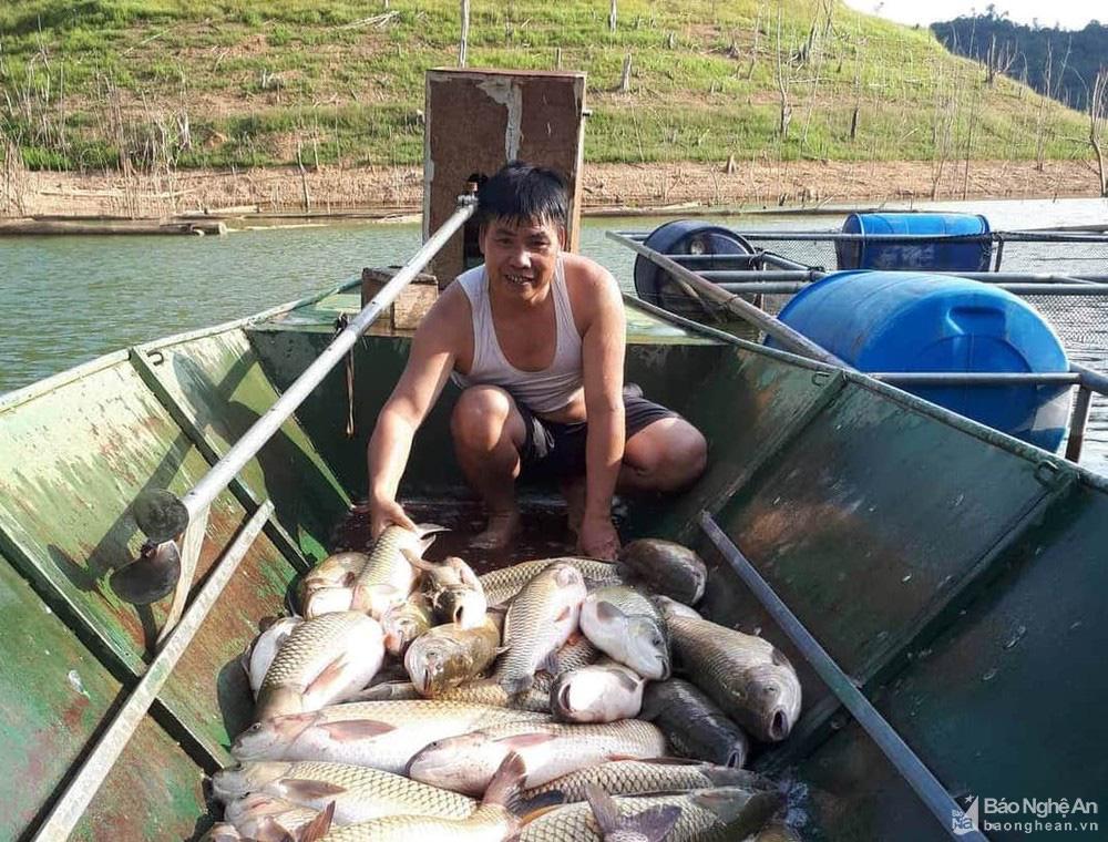 """Nghệ An: Nuôi cá lồng ở lòng hồ thủy điện, toàn loại đặc sản con to bự, nông dân """"bỏ túi"""" hàng trăm triệu đồng - Ảnh 6."""