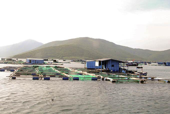 Loài tôm gì ở tỉnh Khánh Hòa đang khan hiếm giống, giá tôm giống tăng thêm tới 100.000-150.000 đồng/con, không có mà mua? - Ảnh 1.