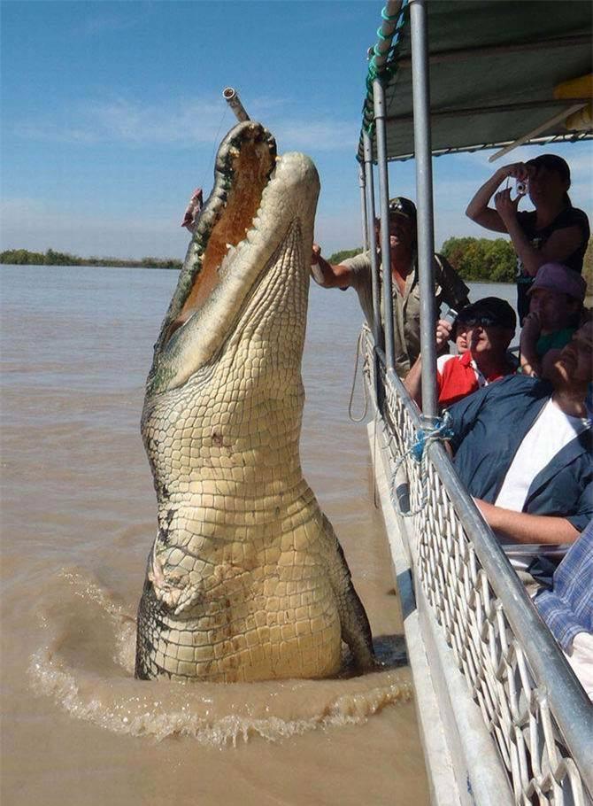 Điểm danh những 'gã khổng lồ' trong thế giới động vật - Ảnh 17.