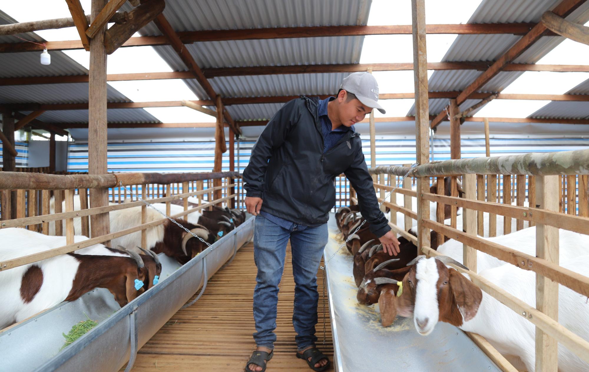 Vừa nuôi thỏ, vừa nuôi dê, 9X này thu nhập tiền tỷ mỗi năm - Ảnh 3.