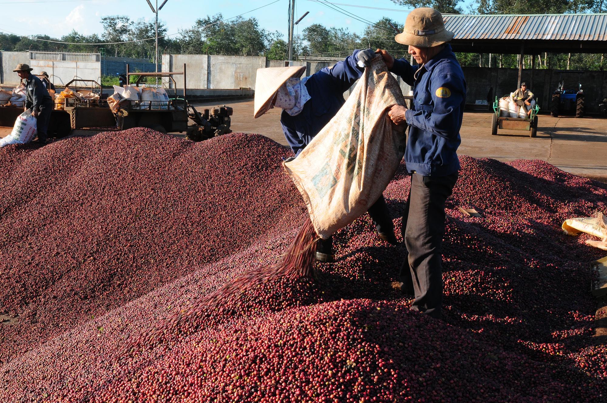 Tạo đà phát triển bền vững cho cà phê Việt Nam - Ảnh 2.