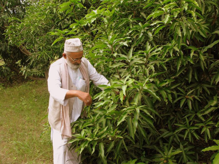"""Thật như đùa: Cây xoài kỳ lạ có tới 300 giống quả khác nhau, đủ dáng, màu, vị, giúp chủ nhân """"hái ra tiền"""" - Ảnh 1."""