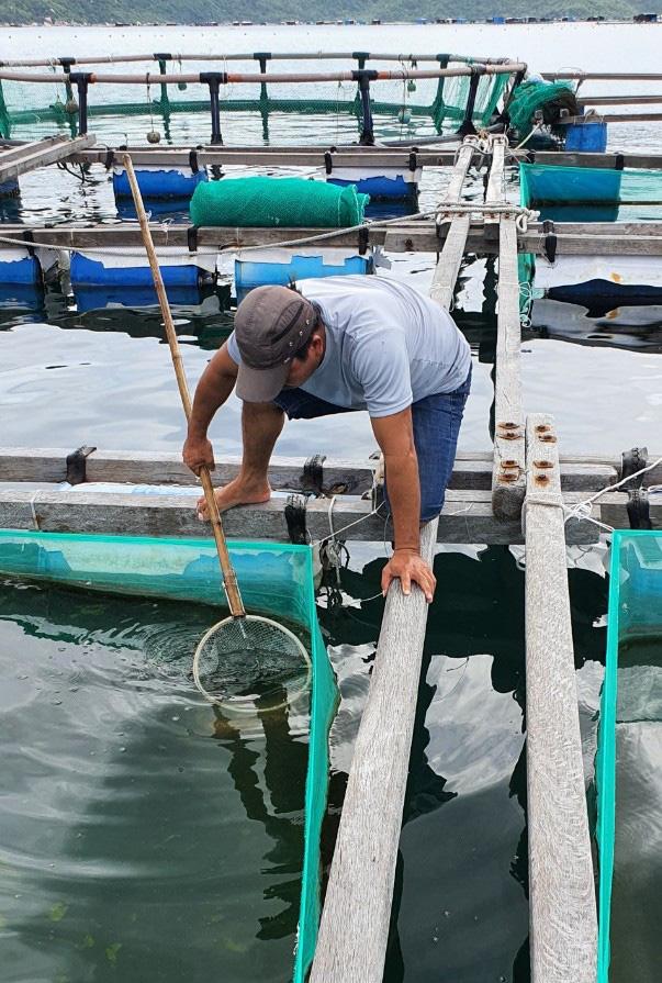 Loài hải sâm quý hiếm, đắt tiền nào vừa được nhân giống thành công ở tỉnh Khánh Hòa? - Ảnh 4.