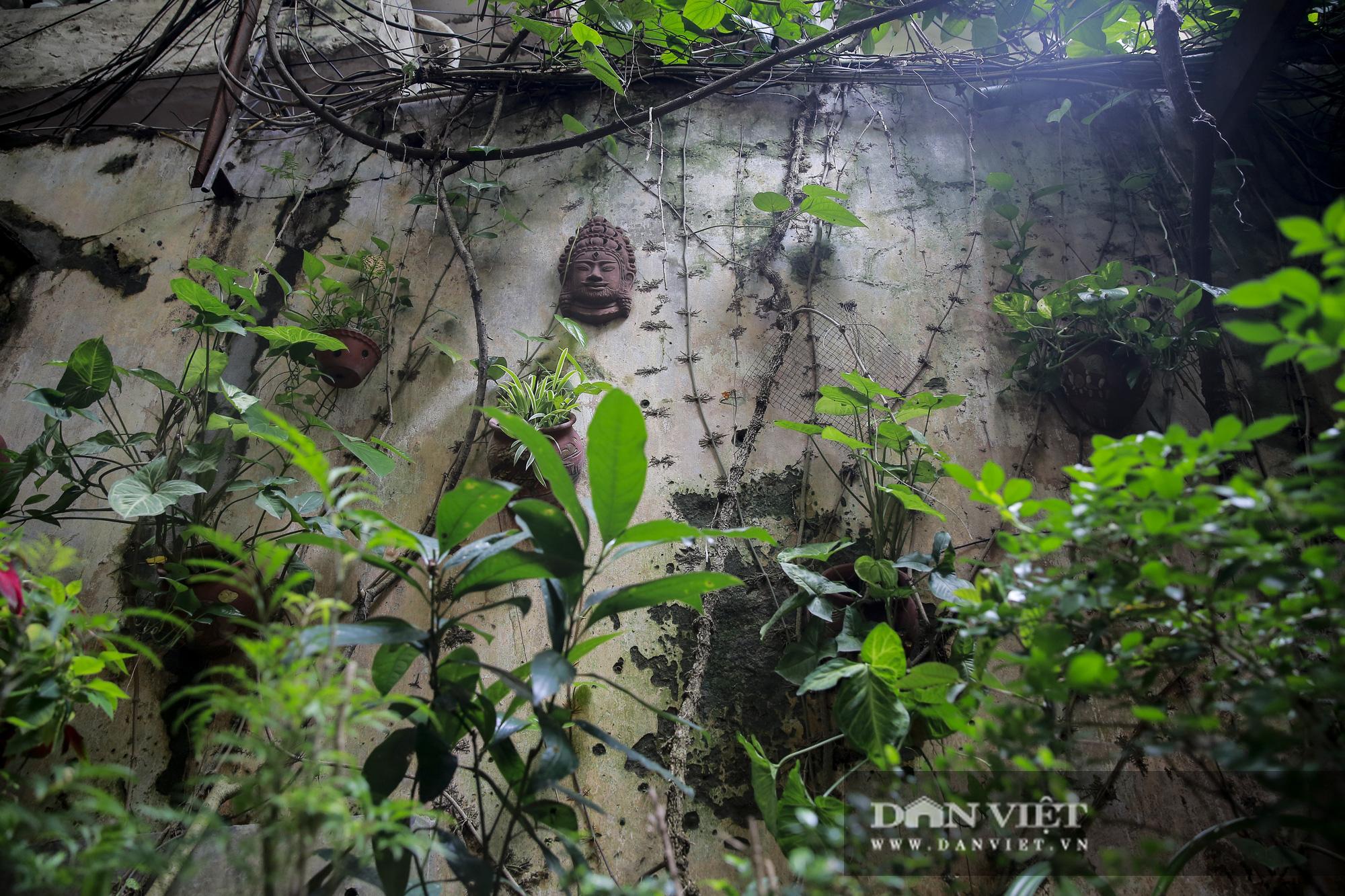 Khám phá ngôi nhà vườn xuyên phố duy nhất ở phố cổ Hà Nội - Ảnh 4.