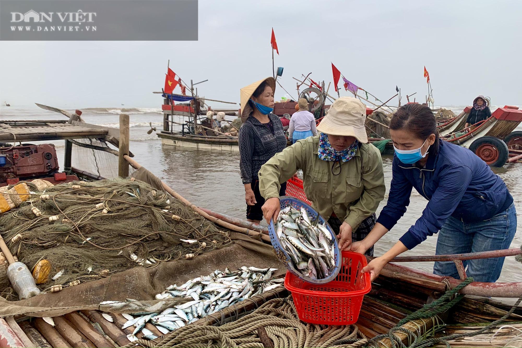 """Trung Quốc tạm ngừng """"ăn"""", ngư dân Nghệ An đành bán rẻ """"lộc biển"""" cho thương lái - Ảnh 8."""