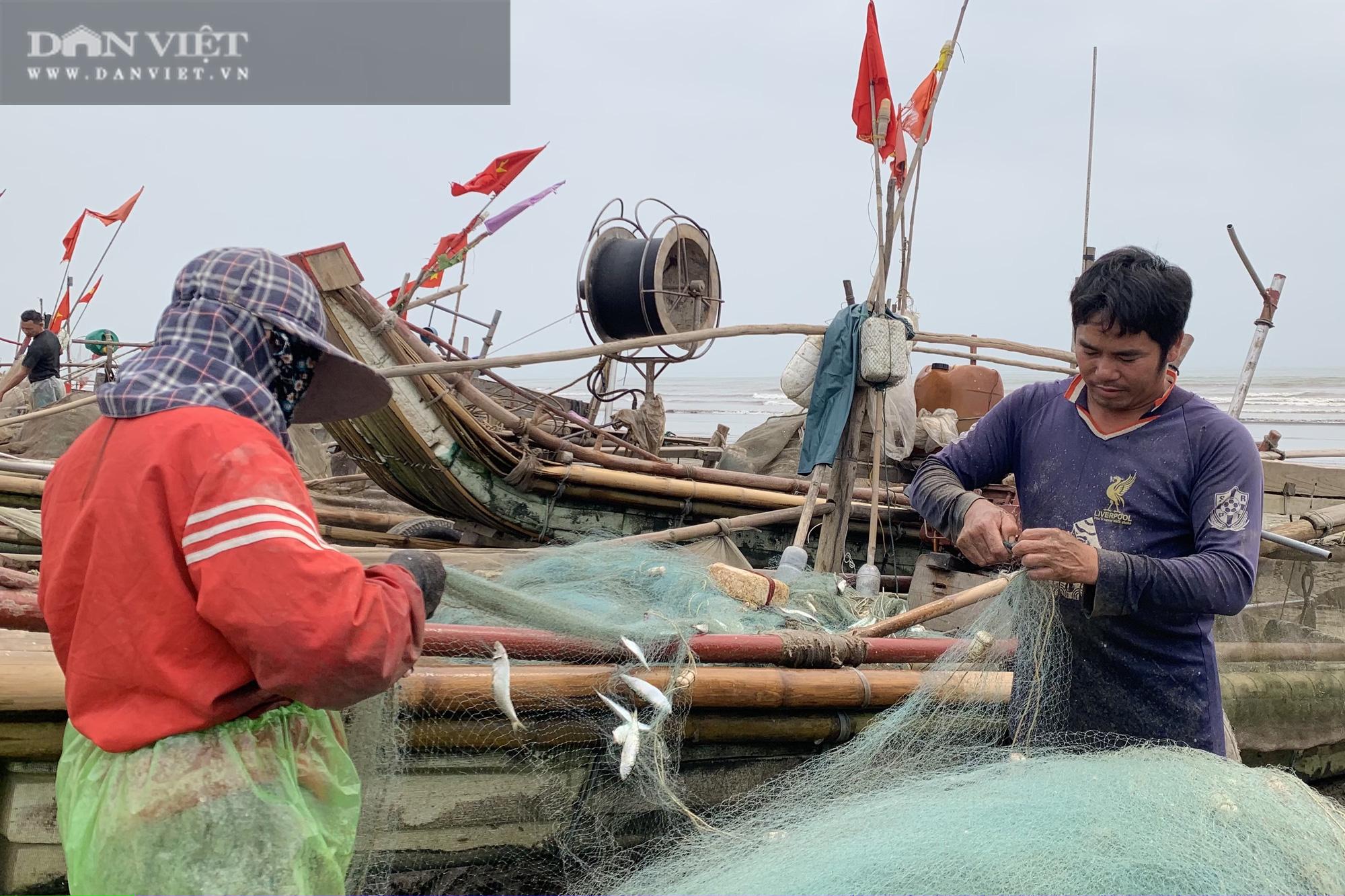 """Trung Quốc tạm ngừng """"ăn"""", ngư dân Nghệ An đành bán rẻ """"lộc biển"""" cho thương lái - Ảnh 9."""