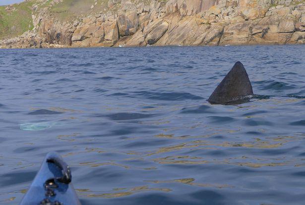 Các bãi biển ở Anh phải đối mặt với sự xâm lược kinh hoàng của cá mập - Ảnh 3.