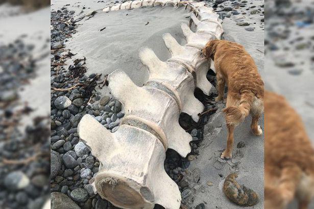 Bộ xương khổng lồ được tìm thấy ở Scotland – liệu có phải là của quái vật hồ Loch Ness? - Ảnh 1.