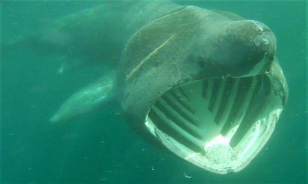 Các bãi biển ở Anh phải đối mặt với sự xâm lược kinh hoàng của cá mập - Ảnh 5.