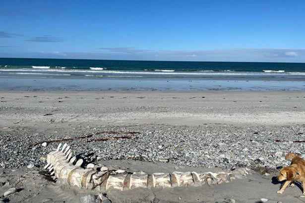 Bộ xương khổng lồ được tìm thấy ở Scotland – liệu có phải là của quái vật hồ Loch Ness? - Ảnh 2.