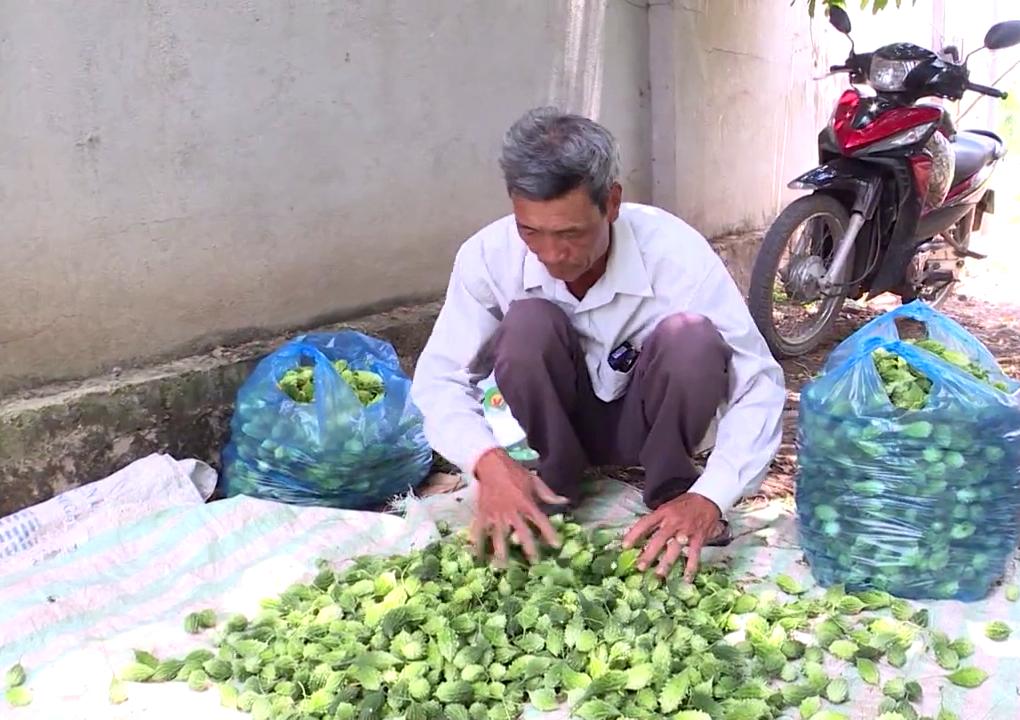 Đồng Nai: Bỏ ra 30 triệu trồng rau dại có trái sần sùi, đắng ngắt, ông nông dân thu 300 triệu đồng mỗi năm  - Ảnh 3.