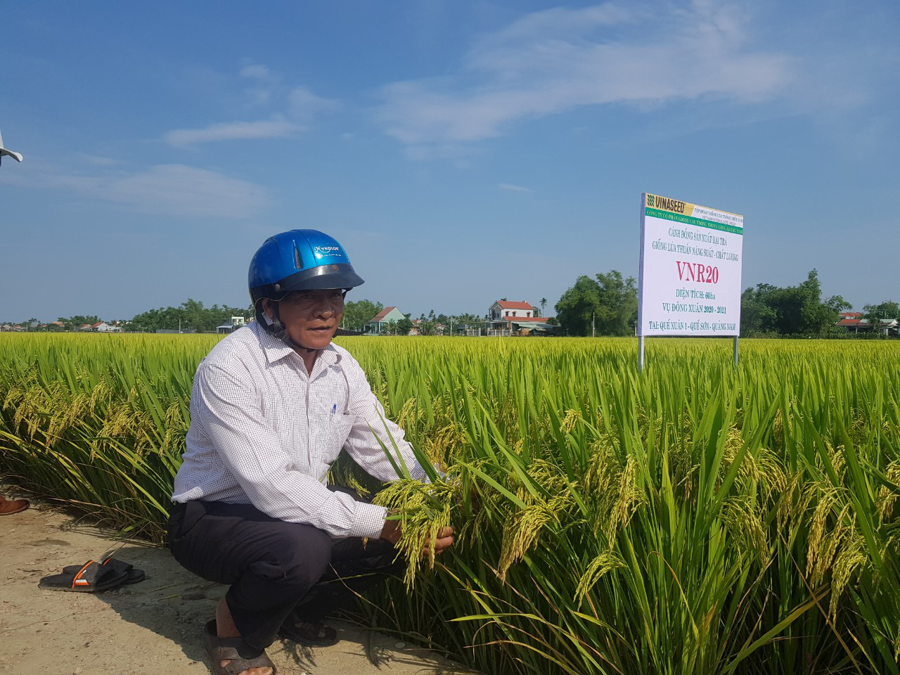 Quảng Nam: Nhiều giống lúa mới triển vọng cho năng suất cao đáp ứng được kỳ vọng của nông dân - Ảnh 1.