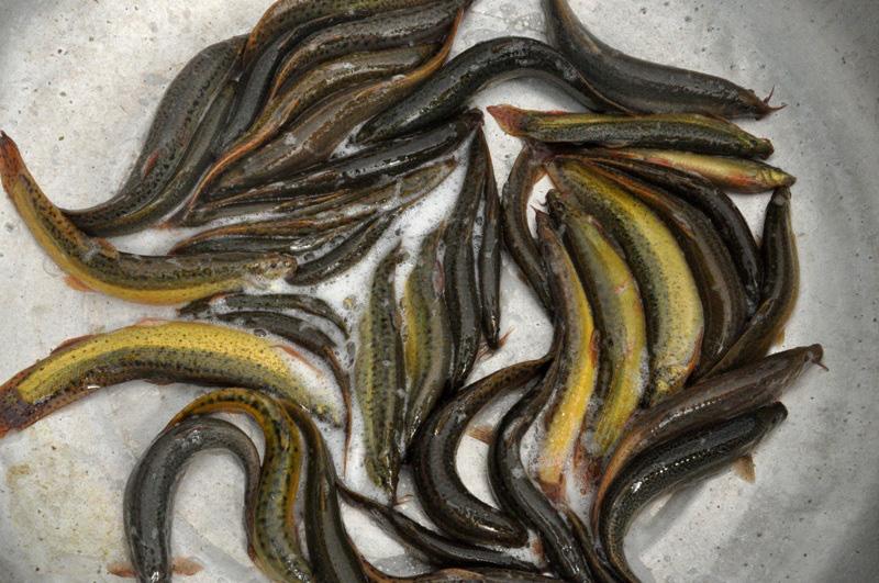 8X bỏ nghề điều dưỡng về quê làm bạn với ốc, cá, kiếm nửa tỷ đồng mỗi năm - Ảnh 5.