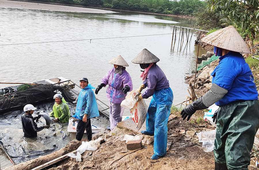 """Văn Đức rời thành phố Hải Phòng """"đầu quân"""" sang Quảng Ninh nuôi cá trắm đen khủng, doanh thu 15-20 tỷ mỗi năm - Ảnh 2."""
