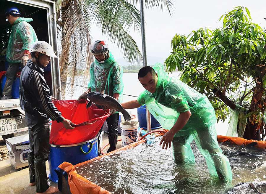 """Văn Đức rời thành phố Hải Phòng """"đầu quân"""" sang Quảng Ninh nuôi cá trắm đen khủng, doanh thu 15-20 tỷ mỗi năm - Ảnh 3."""