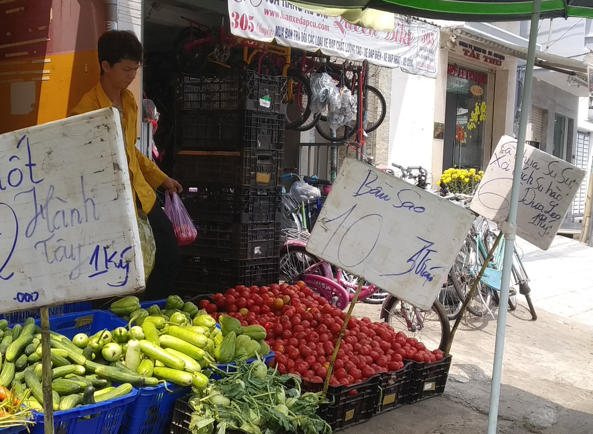 Ngỡ ngàng với loại cà chua Lâm Đồng giá nửa triệu đồng/kg - Ảnh 1.