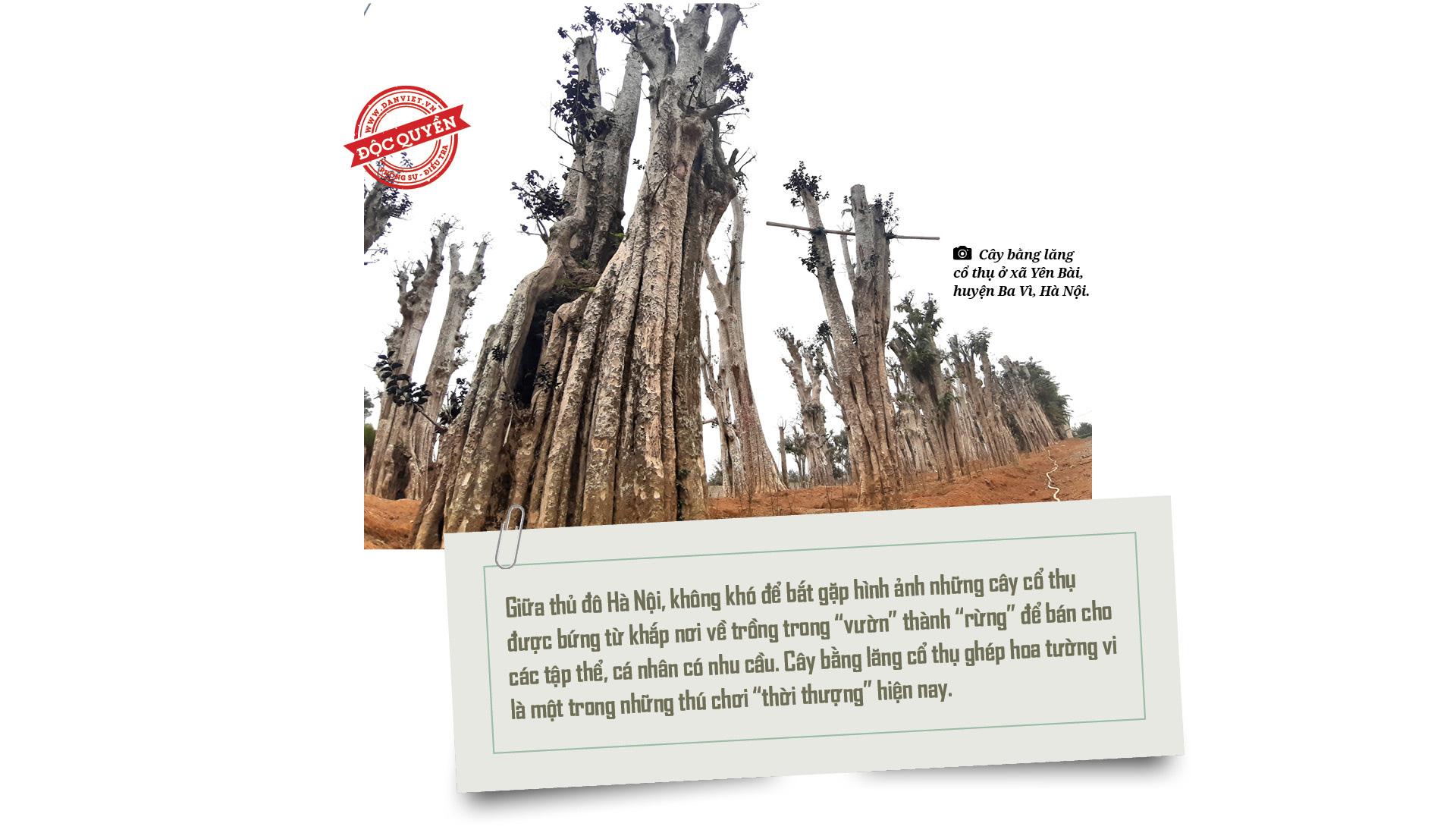 """Điều tra: Lật mặt nạ các """"phù thủy"""" hô biến những rừng cây cổ thụ! - Ảnh 3."""