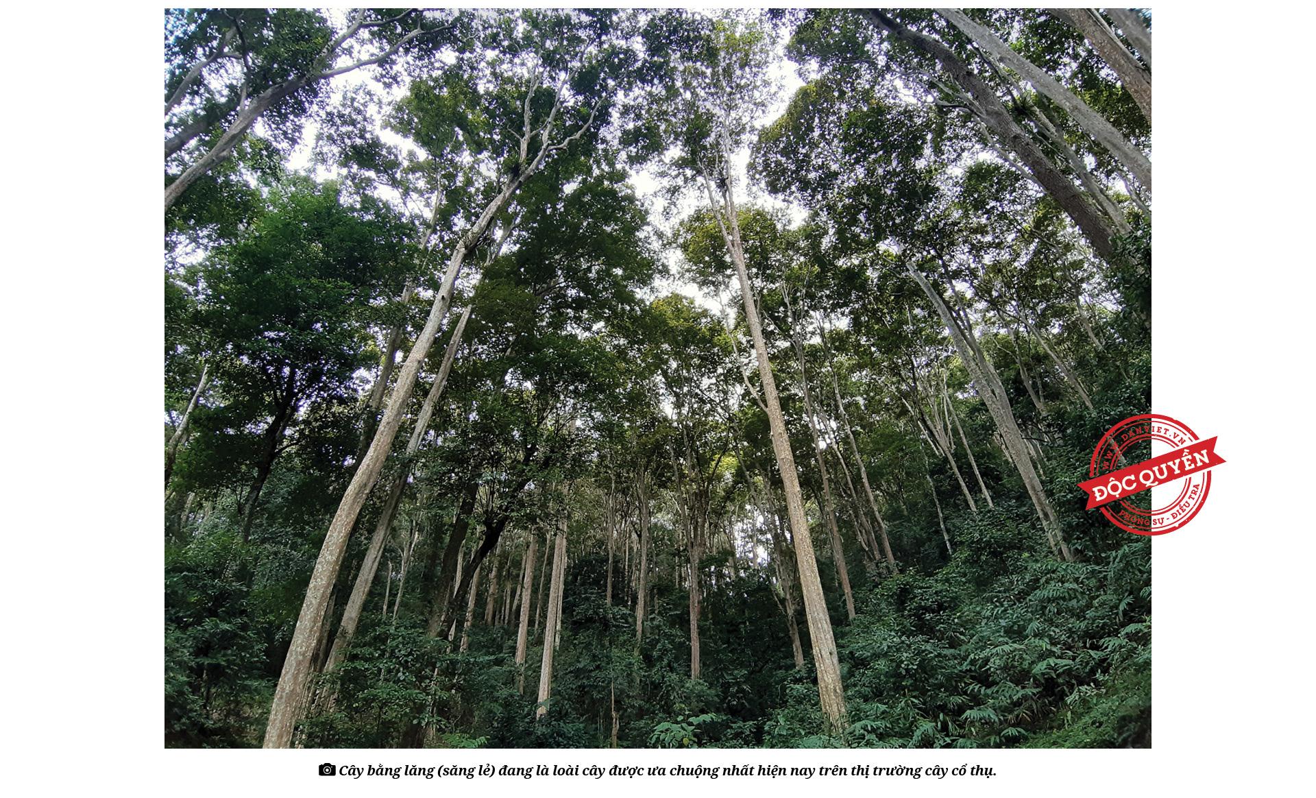 """Điều tra: Lật mặt nạ các """"phù thủy"""" hô biến những rừng cây cổ thụ! - Ảnh 9."""