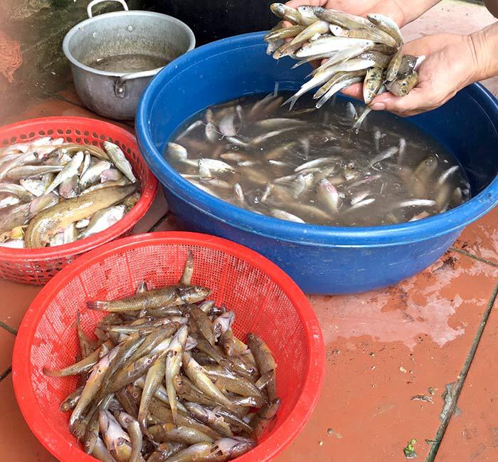 Cá bống suối đặc sản ở Tuyên Quang con chỉ be bé mà làm món gì cũng ăn ngon quên sầu - Ảnh 1.