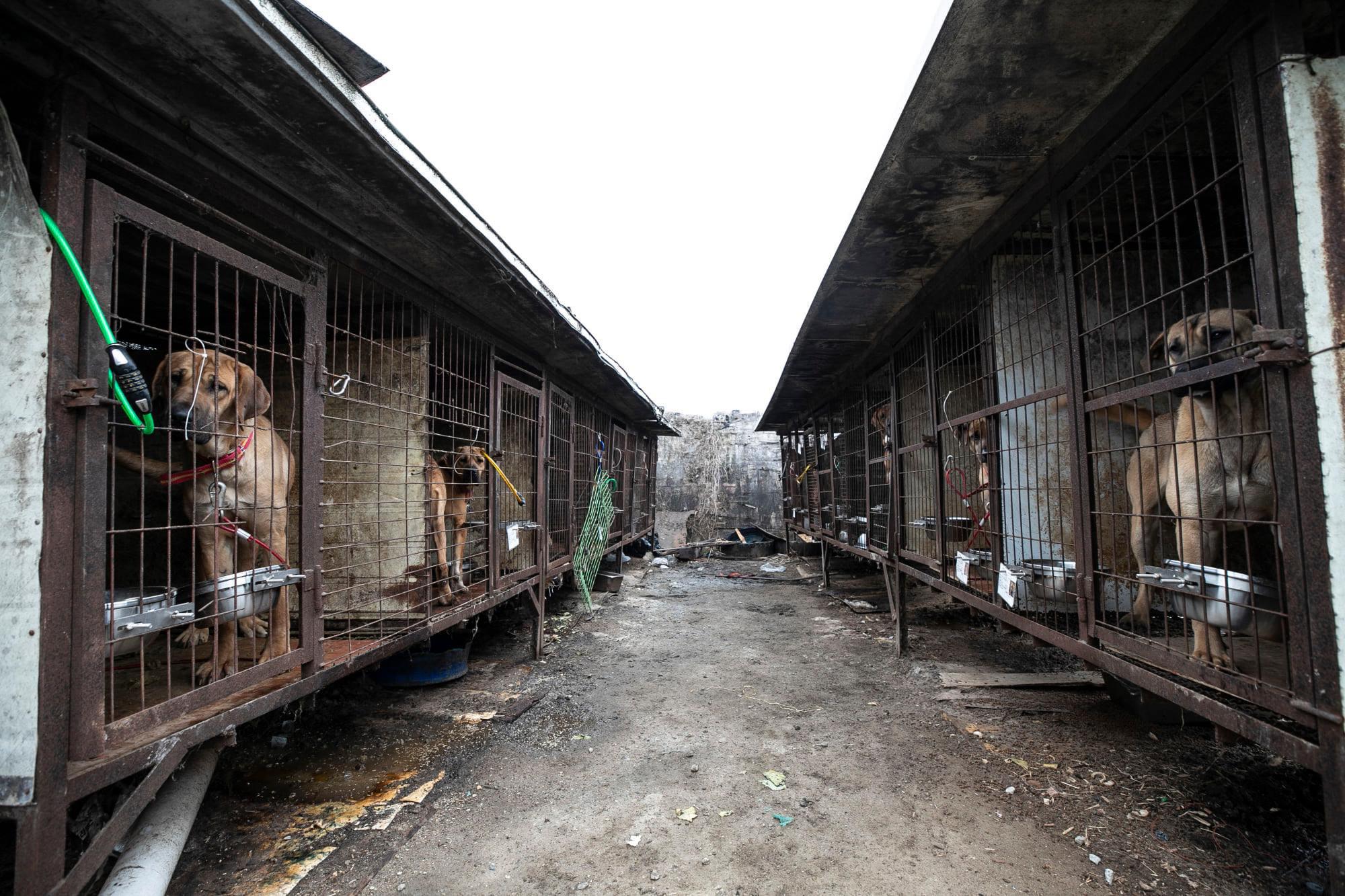 Những hình ảnh gây sốc trong hành trình giải cứu những chú chó khỏi lò mổ - Ảnh 4.