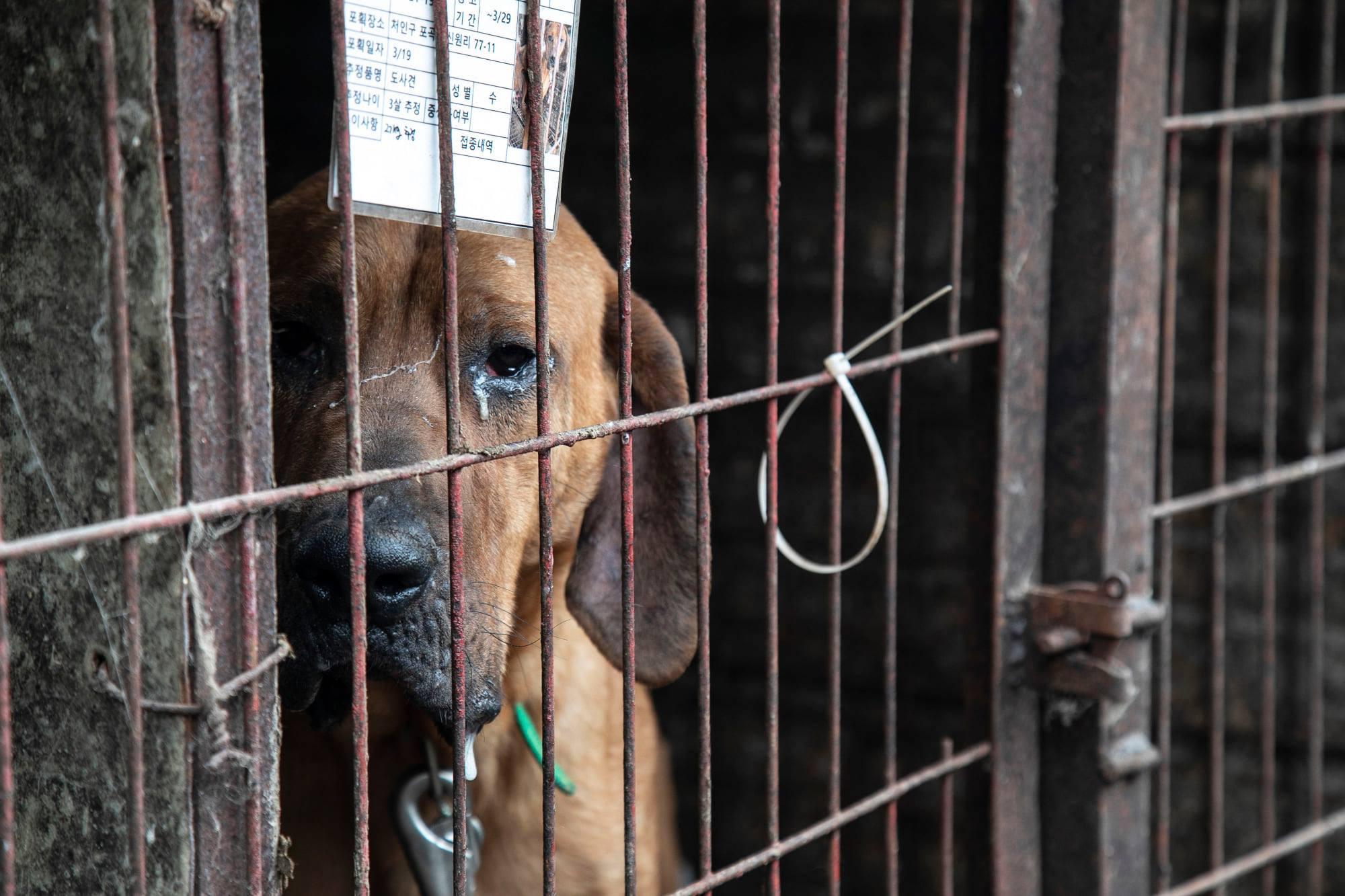Những hình ảnh gây sốc trong hành trình giải cứu những chú chó khỏi lò mổ - Ảnh 6.