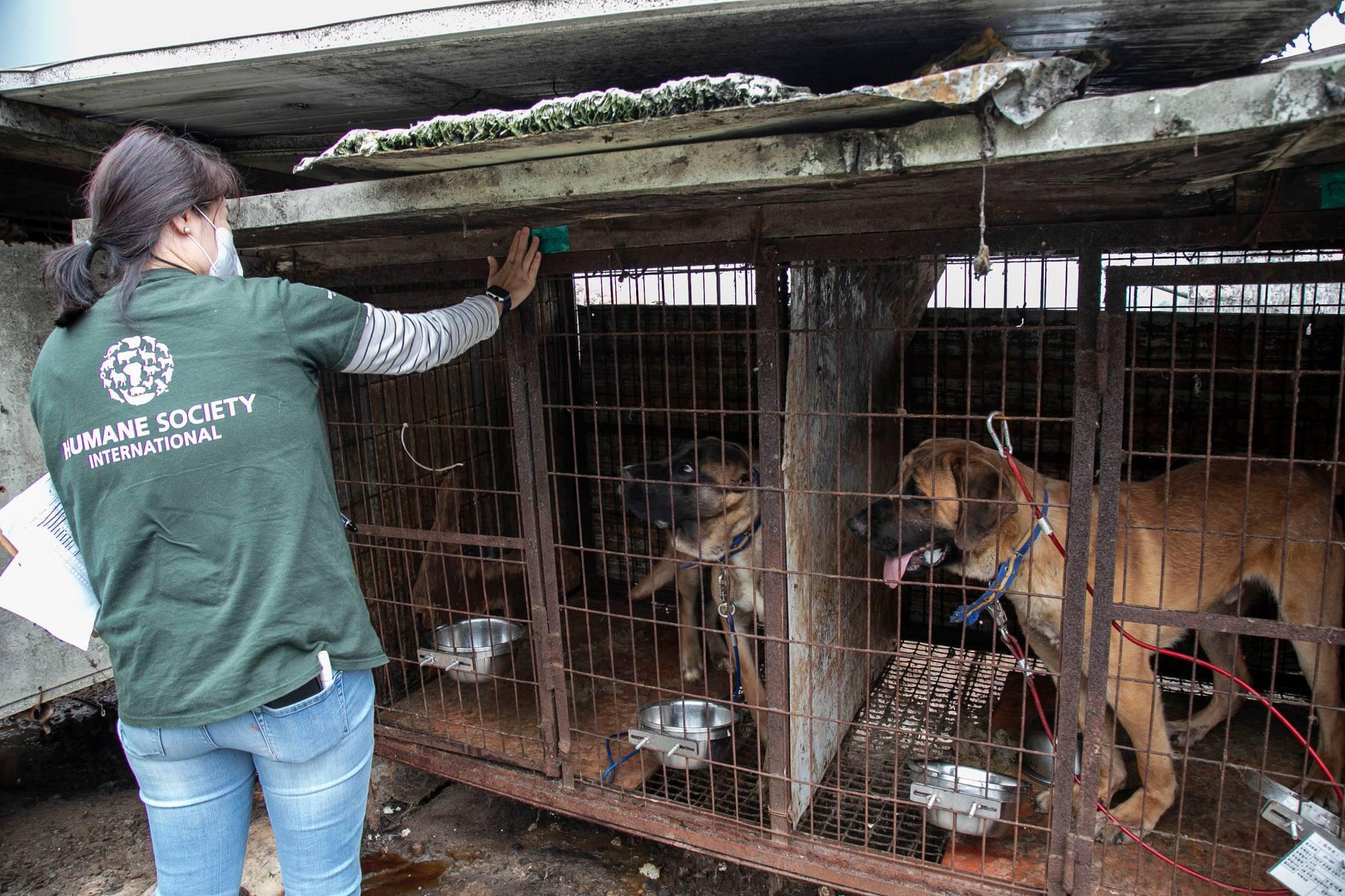 Những hình ảnh gây sốc trong hành trình giải cứu những chú chó khỏi lò mổ - Ảnh 5.