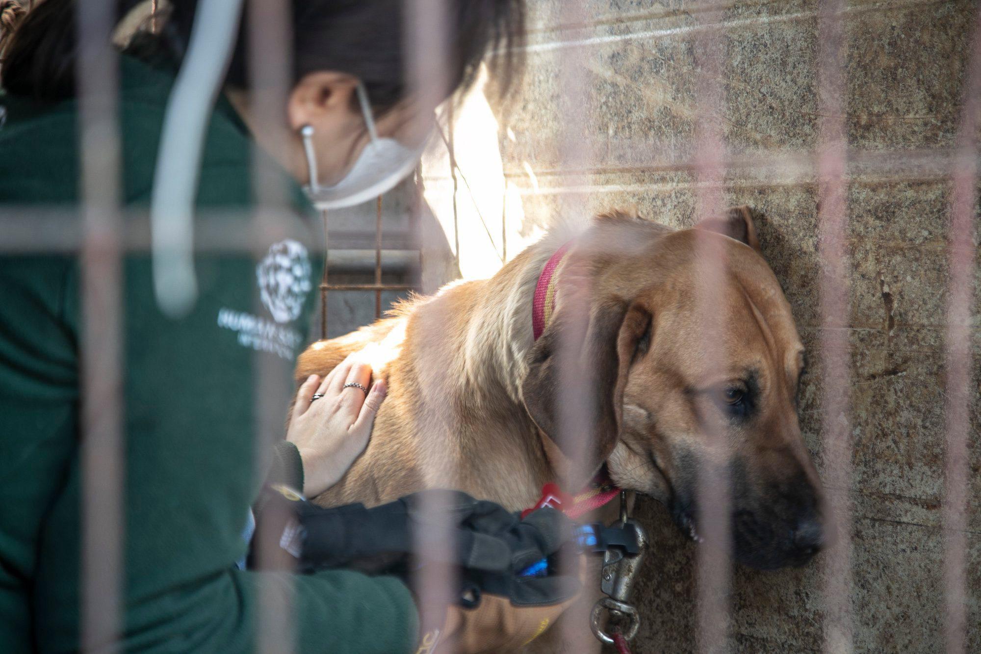 Những hình ảnh gây sốc trong hành trình giải cứu những chú chó khỏi lò mổ - Ảnh 11.
