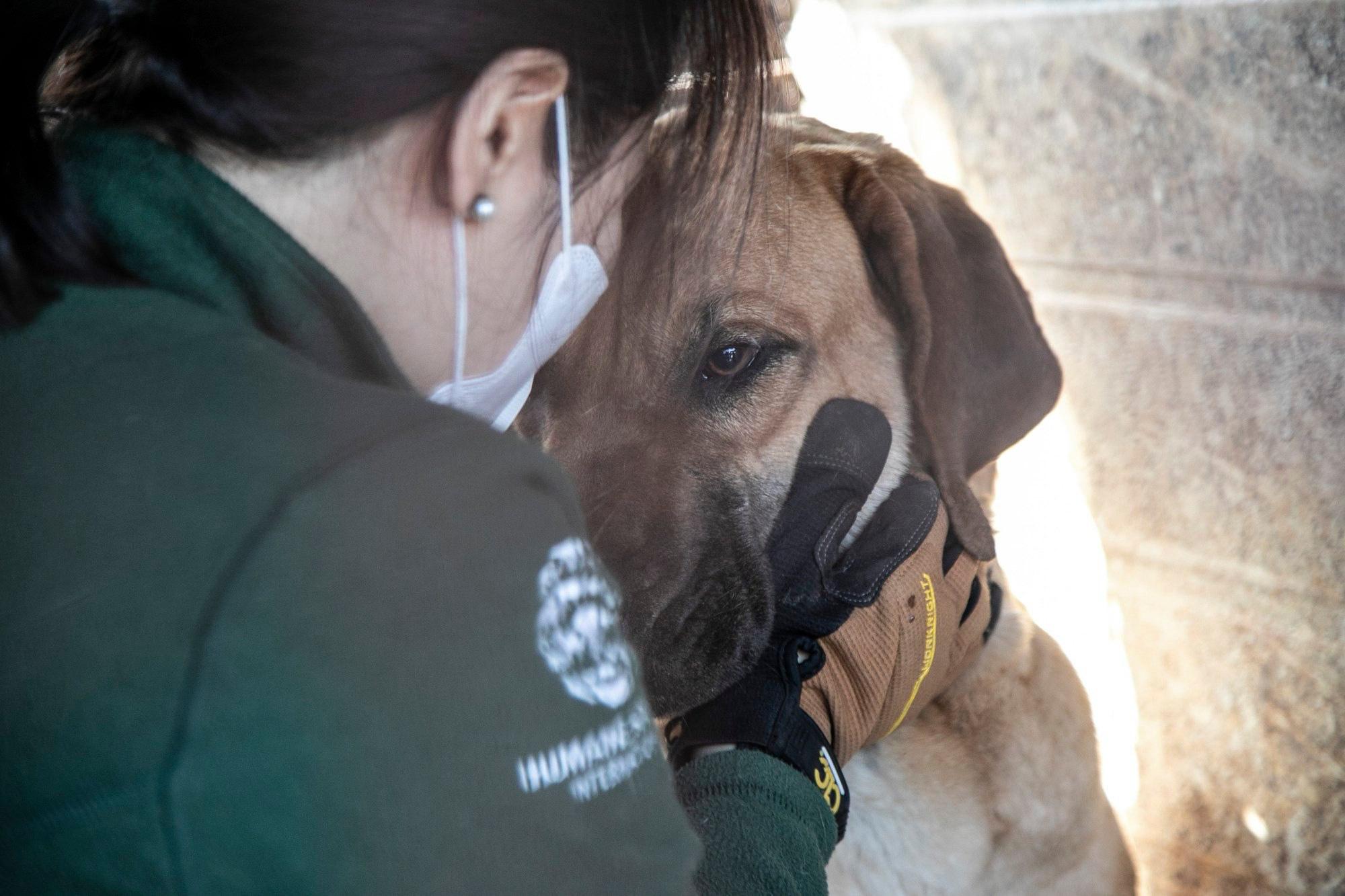 Những hình ảnh gây sốc trong hành trình giải cứu những chú chó khỏi lò mổ - Ảnh 14.