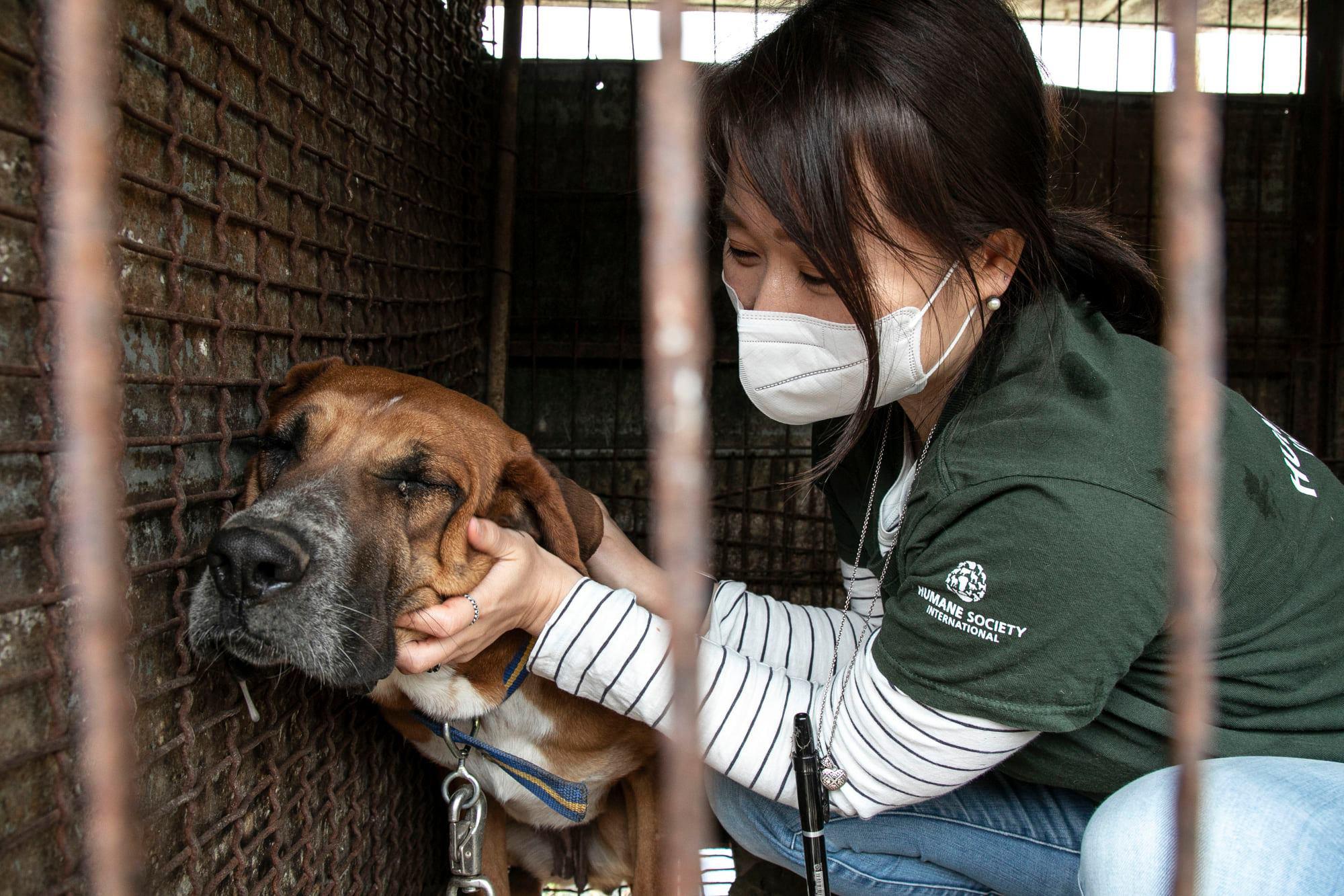 Những hình ảnh gây sốc trong hành trình giải cứu những chú chó khỏi lò mổ - Ảnh 13.
