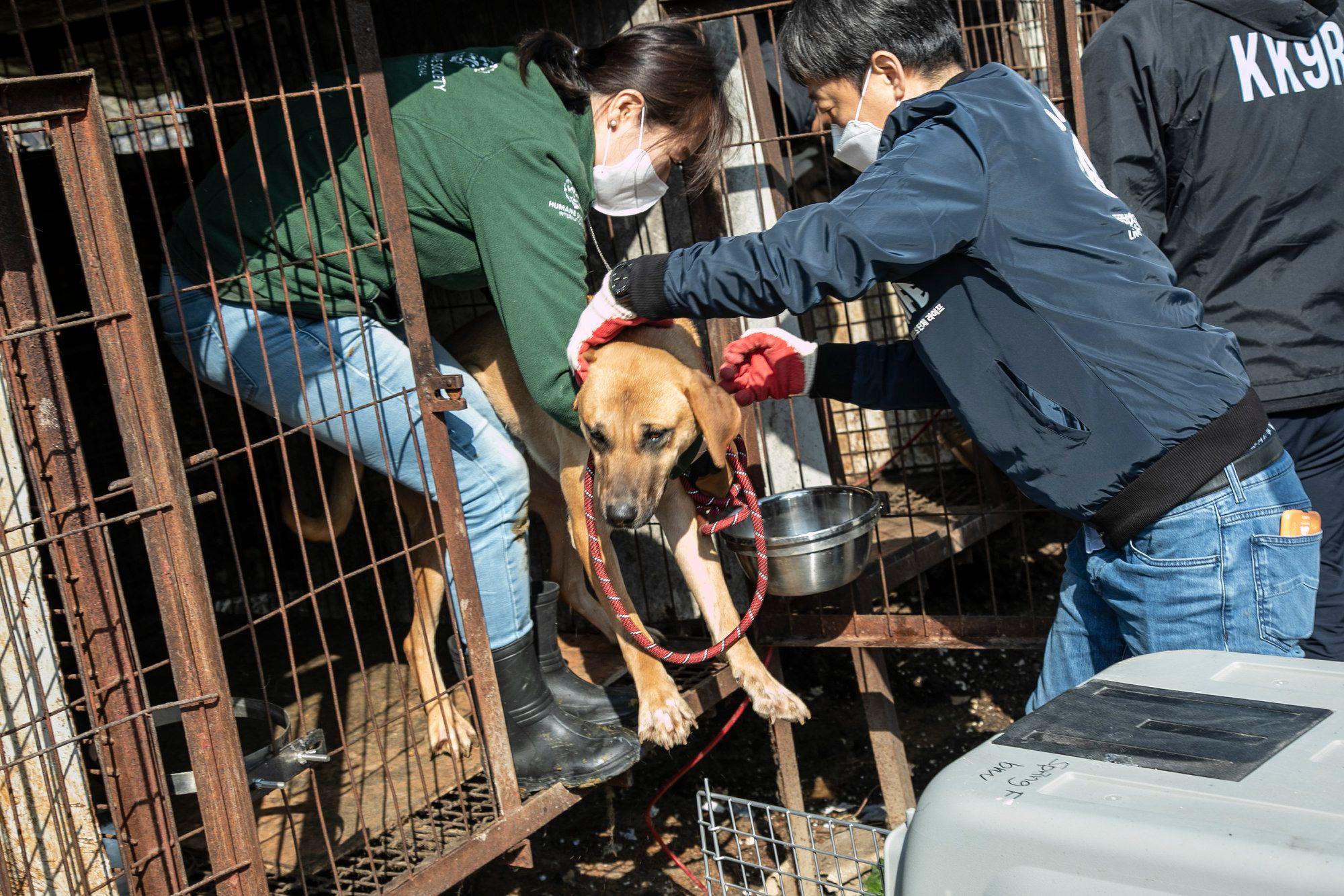 Những hình ảnh gây sốc trong hành trình giải cứu những chú chó khỏi lò mổ - Ảnh 9.