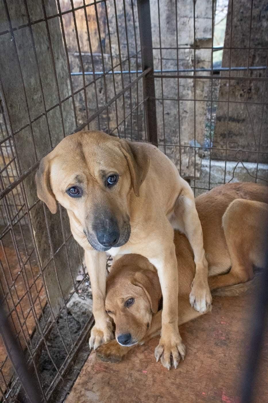 Những hình ảnh gây sốc trong hành trình giải cứu những chú chó khỏi lò mổ - Ảnh 10.