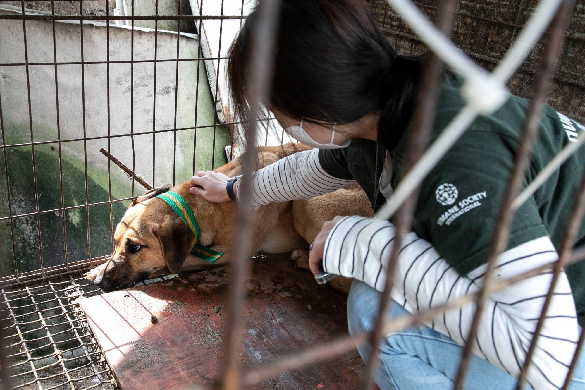Những hình ảnh gây sốc trong hành trình giải cứu những chú chó khỏi lò mổ - Ảnh 12.