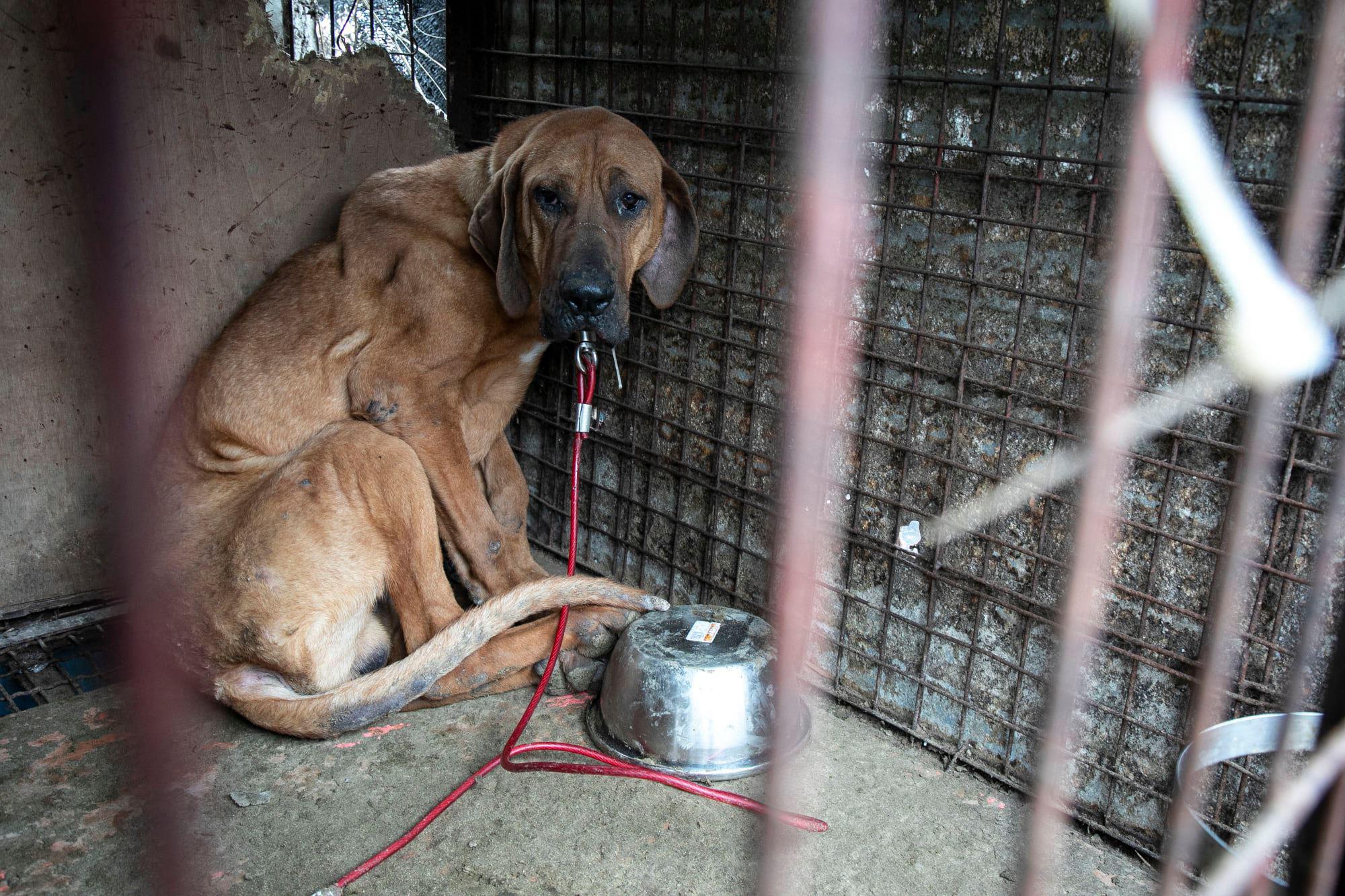 Những hình ảnh gây sốc trong hành trình giải cứu những chú chó khỏi lò mổ - Ảnh 7.