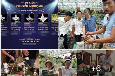 Lừa đảo bán lan đột biến: Tưới nước muối, thuốc diệt cỏ lên mầm hoa lan đột biến đã bán nhằm phi tang - Ảnh 1.
