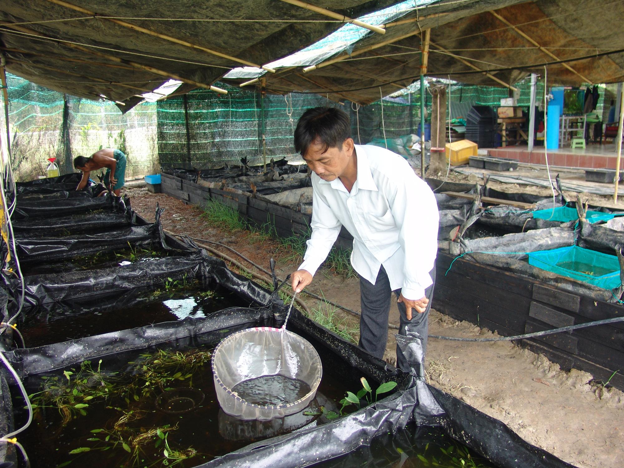 TP.HCM: Bán cá kiểng kiểu này, ông nông dân nuôi cá chỉ cần ngồi nhà thu tiền mỏi tay - Ảnh 4.