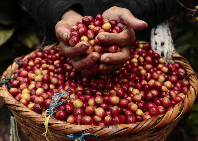 Giá nông sản hôm nay 22/4: Cà phê vẫn khởi sắc, tiêu cao nhất 71.000 đồng/kg - Ảnh 1.