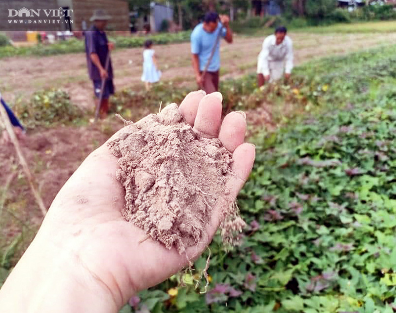 Về xứ thơ cùng xem nông dân trồng đặc sản khoai lang Mỹ Đức theo kiểu trời cho - Ảnh 6.