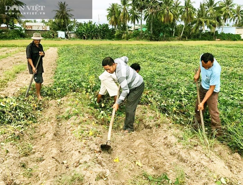 Về xứ thơ cùng xem nông dân trồng đặc sản khoai lang Mỹ Đức theo kiểu trời cho - Ảnh 3.
