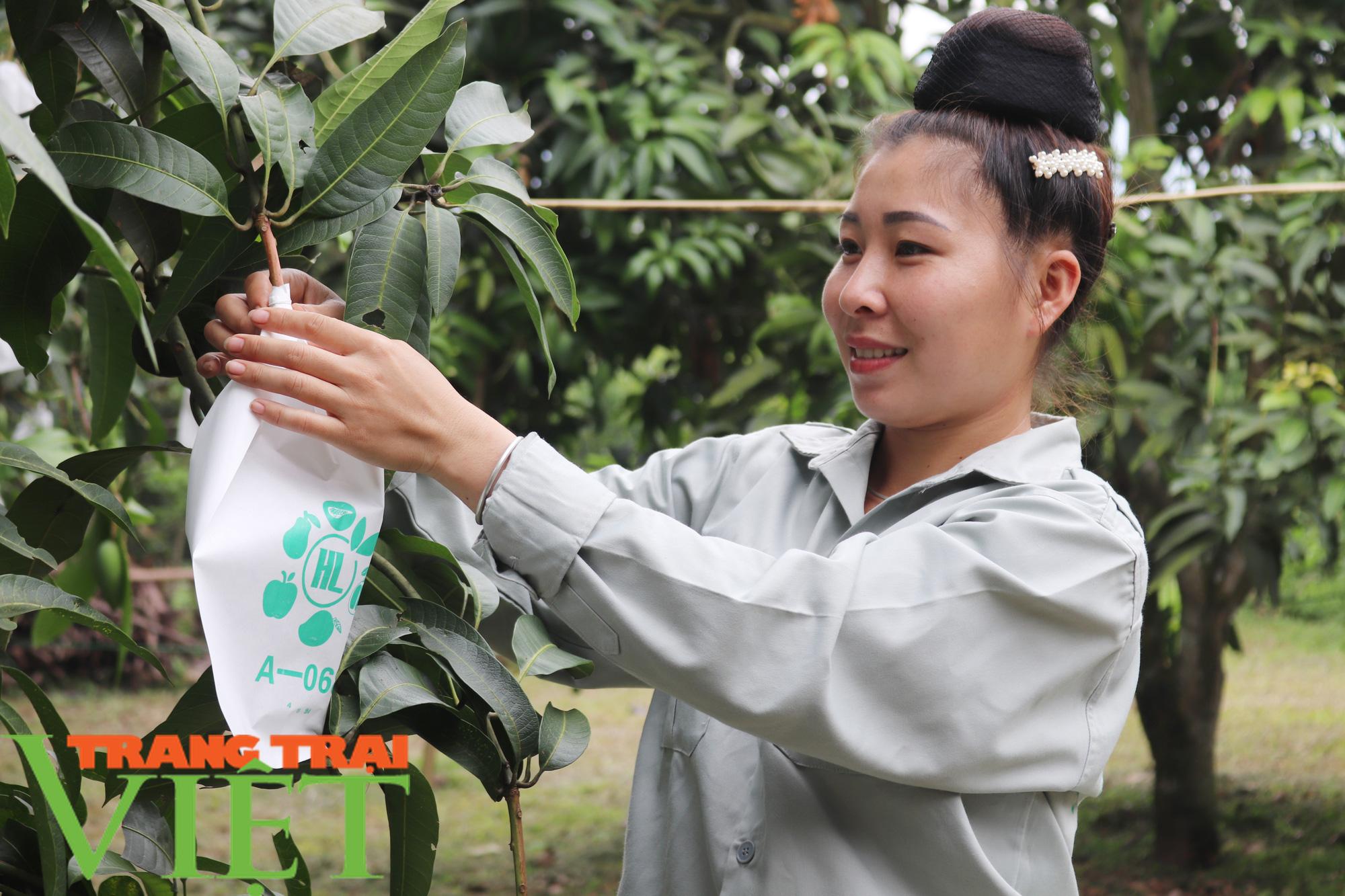 """Video: Phong trào """"mặc áo cho cây ăn quả"""" ở Sơn La, một sáng kiến kỳ diệu - Ảnh 2."""