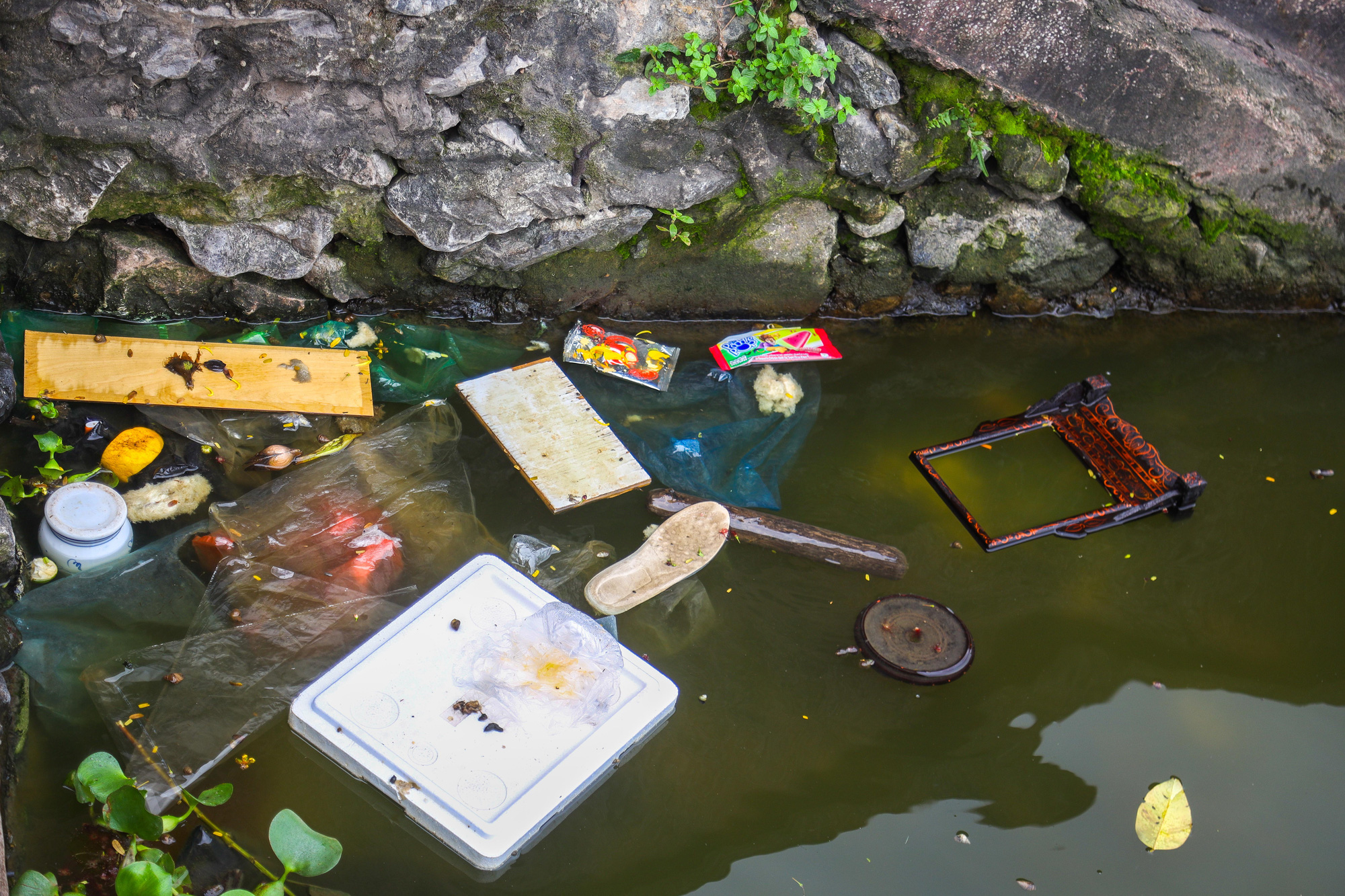 Nước hồ Tây ô nhiễm, Hà Nội yêu cầu Công ty Phú Điền nghiên cứu cải thiện môi trường - Ảnh 2.