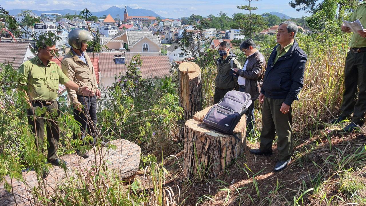 """Video: Hàng chục cây thông cổ thụ giữa trung tâm Đà Lạt bị """"sát hại"""" - Ảnh 7."""