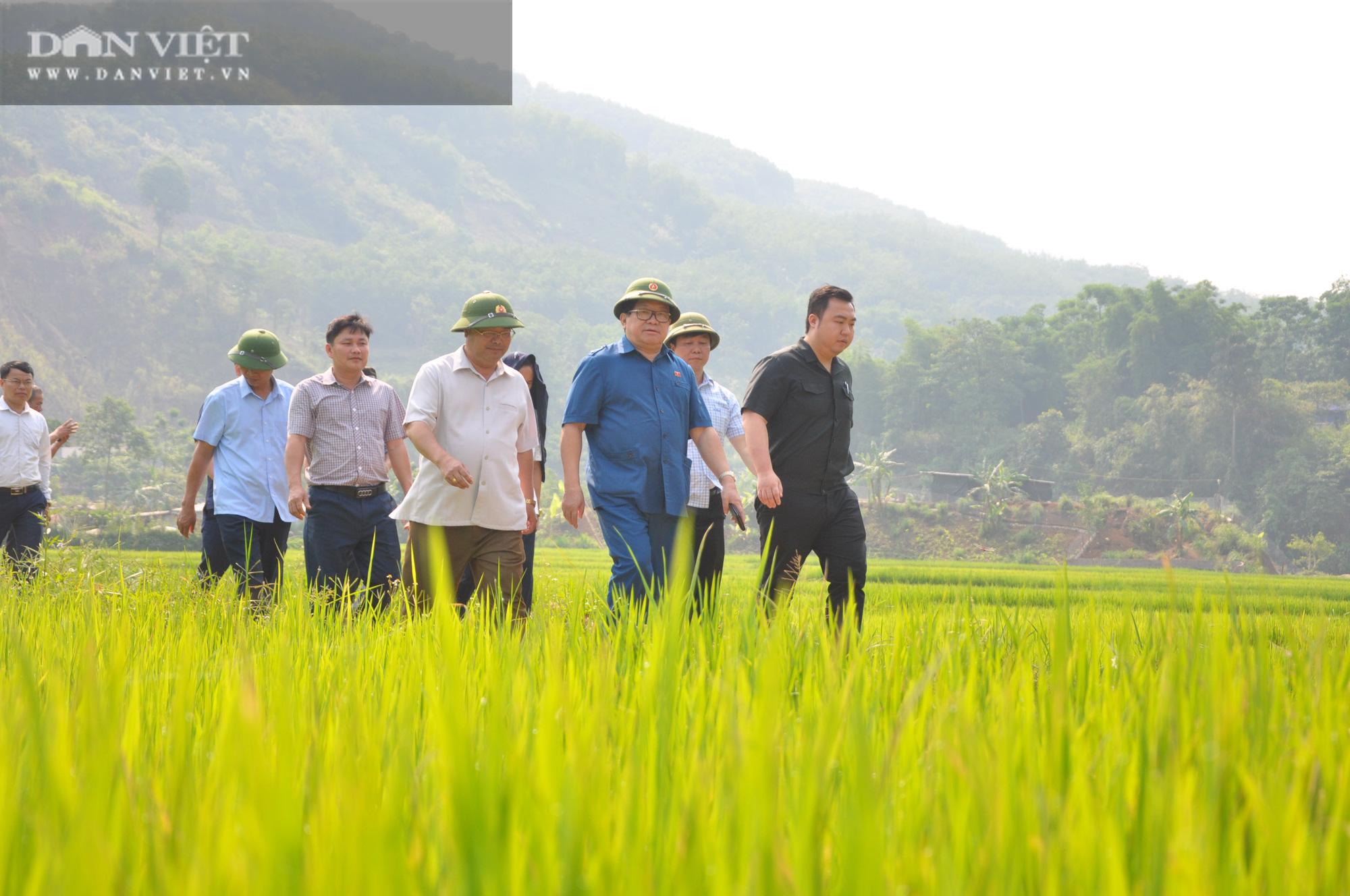 """Chủ tịch Hội Nông dân Việt Nam """"mách nước"""" giúp dân Lai Châu sản xuất lúa theo tiêu chuẩn quốc tế - Ảnh 1."""