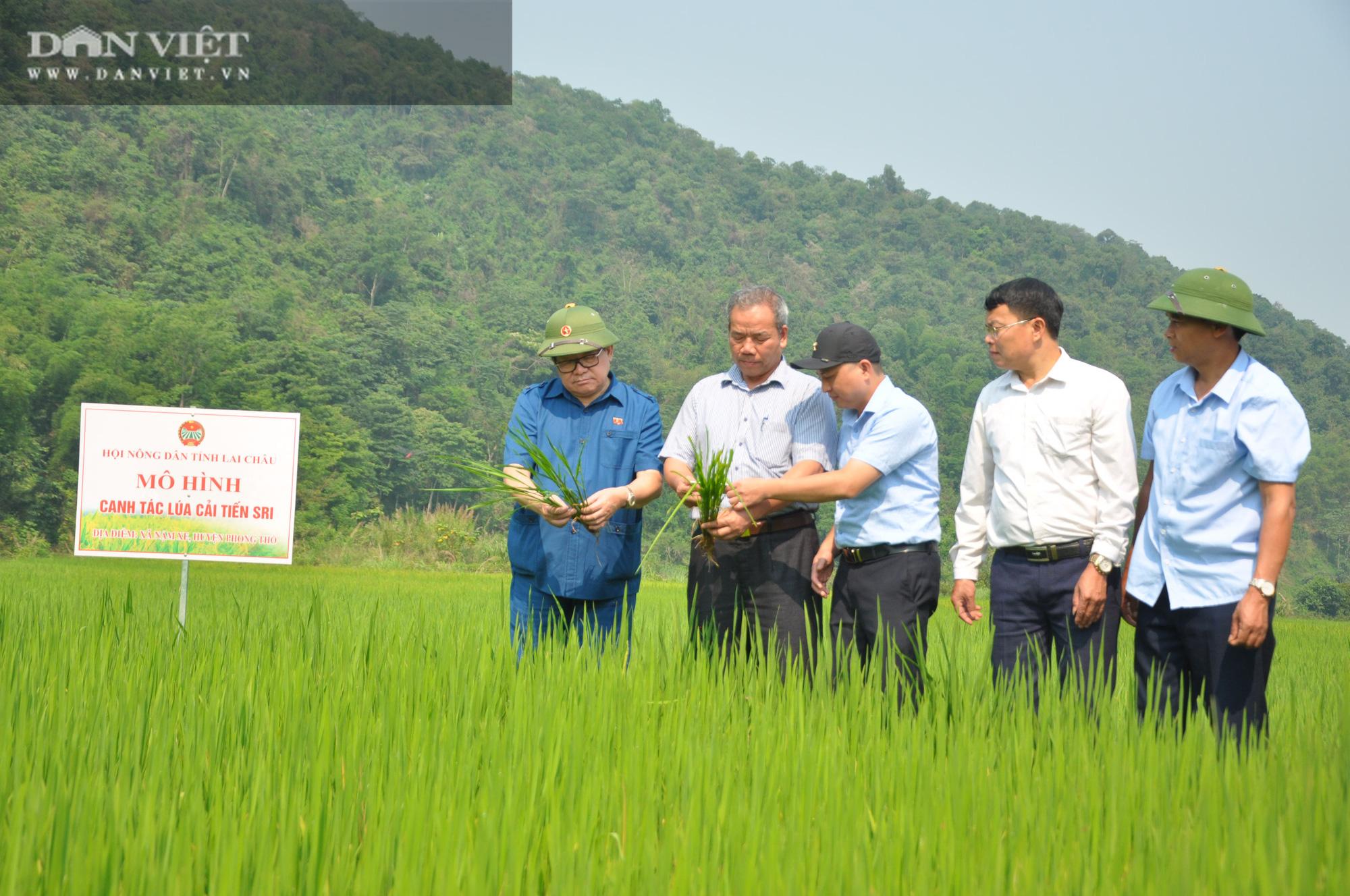 """Chủ tịch Hội Nông dân Việt Nam """"mách nước"""" giúp dân Lai Châu sản xuất lúa theo tiêu chuẩn quốc tế - Ảnh 2."""