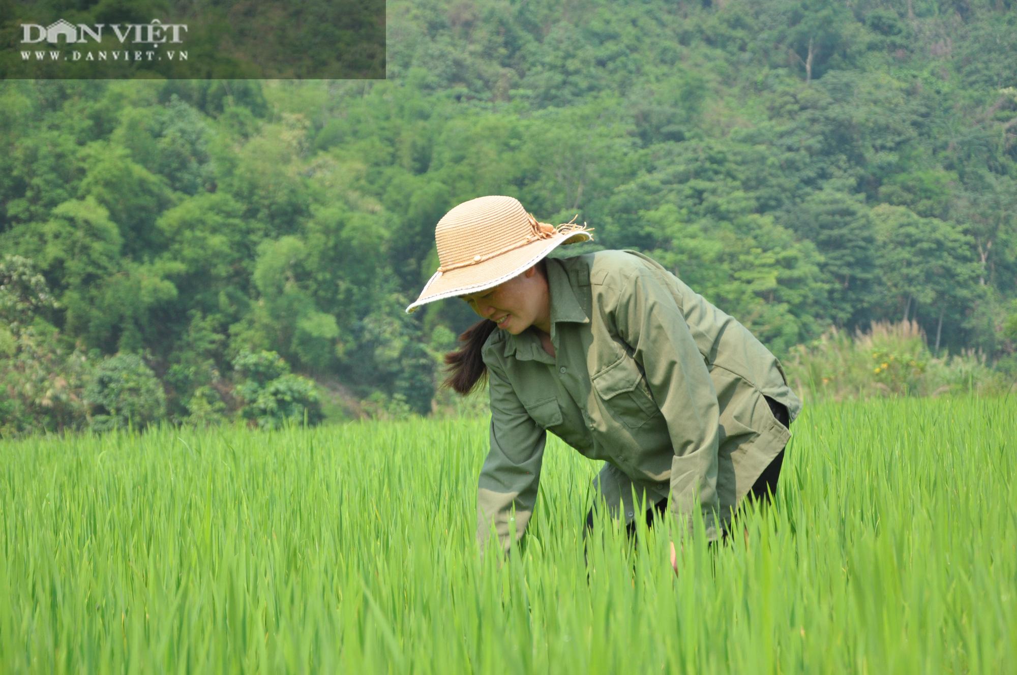 """Chủ tịch Hội Nông dân Việt Nam """"mách nước"""" giúp dân Lai Châu sản xuất lúa theo tiêu chuẩn quốc tế - Ảnh 4."""