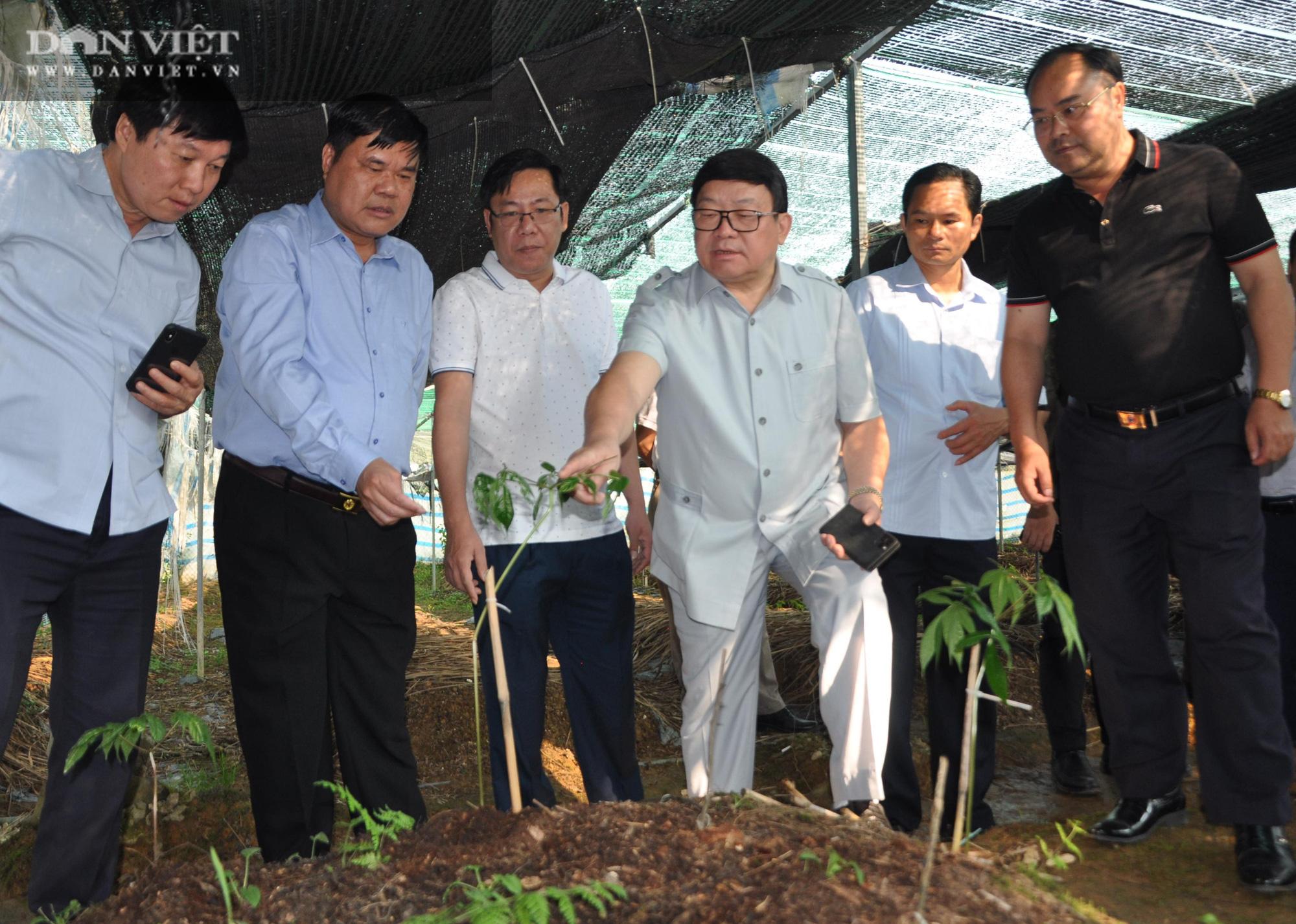 Chủ tịch Hội Nông dân Việt Nam thăm vùng sâm quý ở tỉnh biên cương - Ảnh 1.