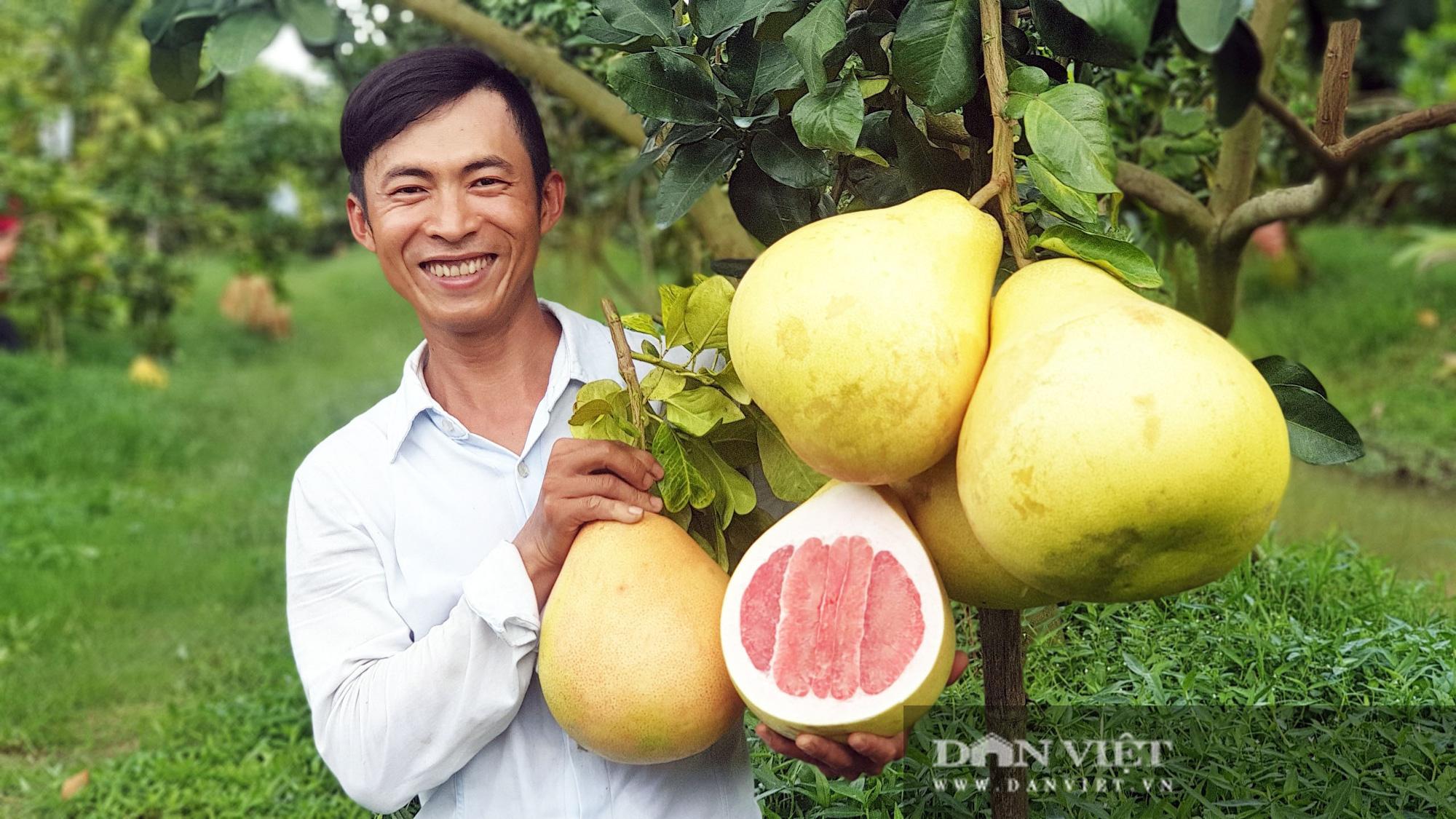 Rất lạ: Trái bưởi màu hồng rất to, treo từng chùm trong vườn nhìn đã mắt ở miền Tây - Ảnh 3.