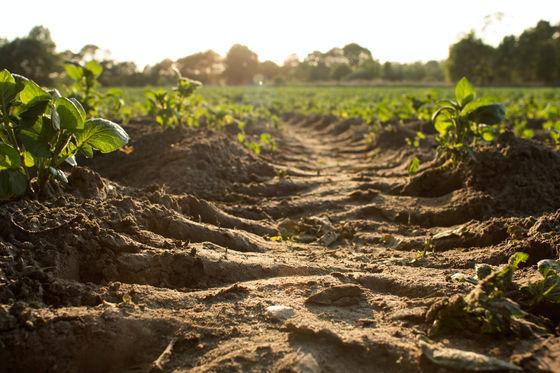 Nông dân khắp thế giới chôn quần lót xuống đất ruộng để làm gì? - Ảnh 3.
