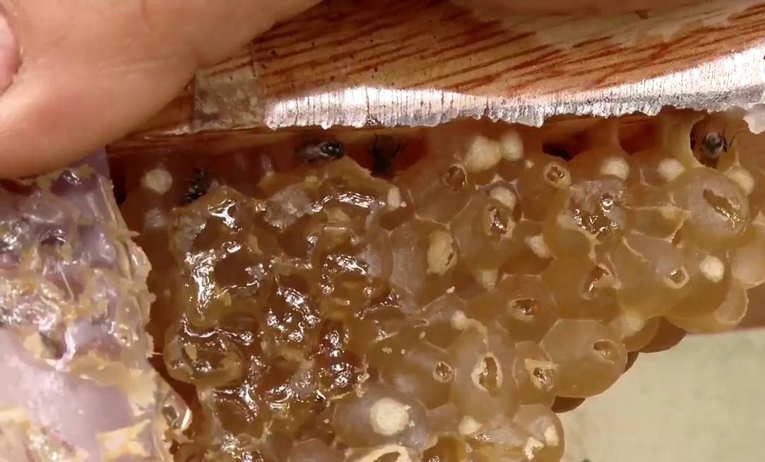 """Bà Rịa-Vũng Tàu: Vô tình nuôi đàn ong lấy nước bọt biến phấn hoa thành mật đắc như vàng, anh nông dân ôm """"kho báu"""" - Ảnh 4."""